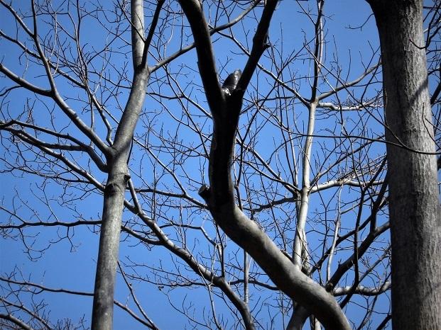 3 18.3.14 秋葉の森散歩・ミズキ (61)