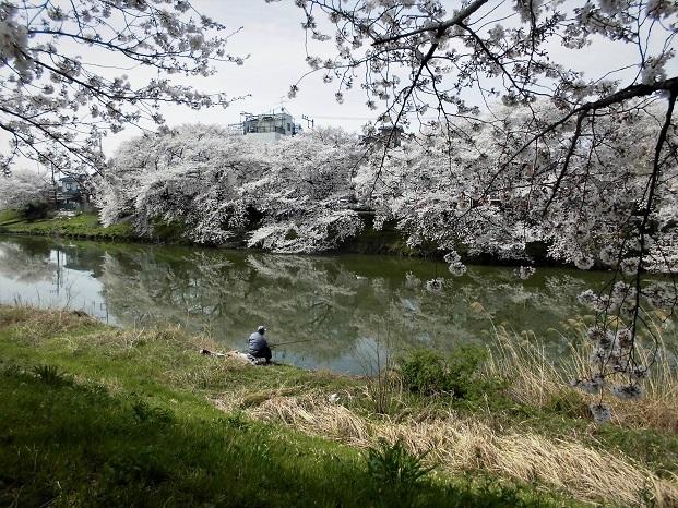 3 18.3.27 桜・ママチャリ (48)