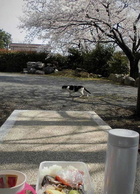 8 18.3.27 桜・ママチャリ (165)