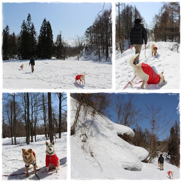 雪の散策路