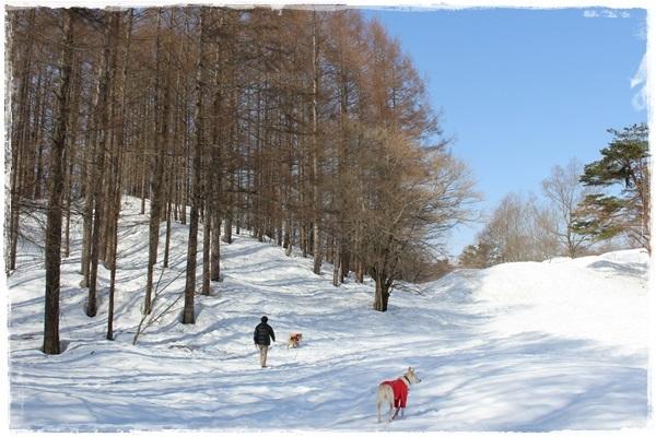 055雪の散策路