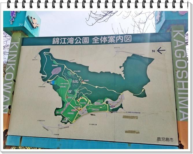 錦江湾公園桜1-1