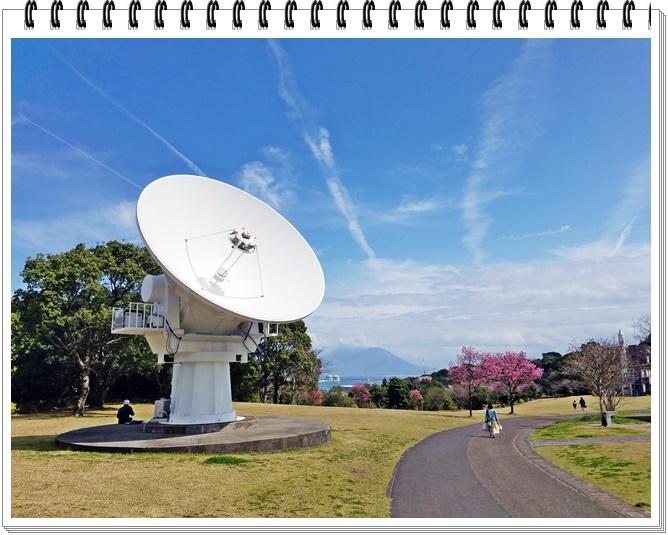 錦江湾公園桜1-3
