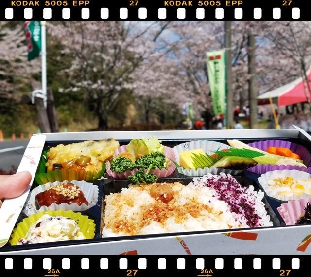 桜満開1-6
