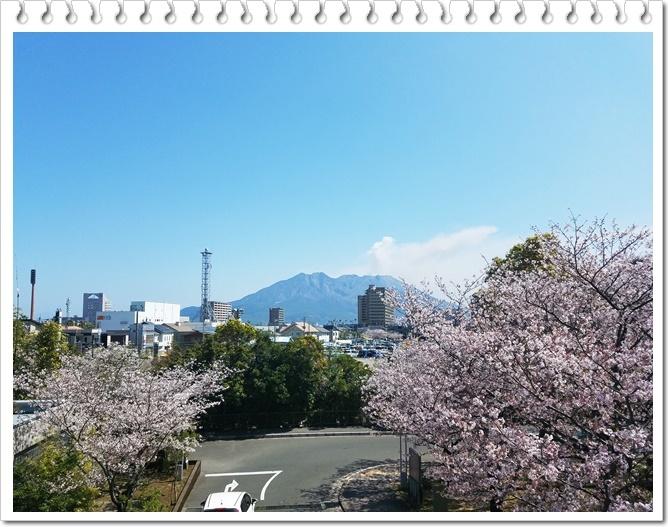 県庁桜1-1