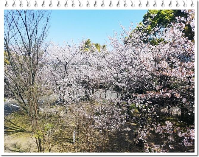 県庁桜1-2