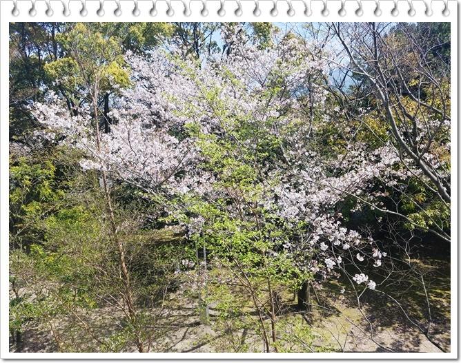 県庁桜1-3