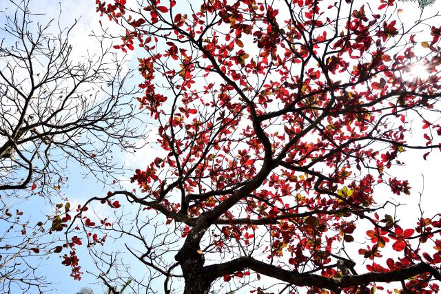 春を告げる木(3)