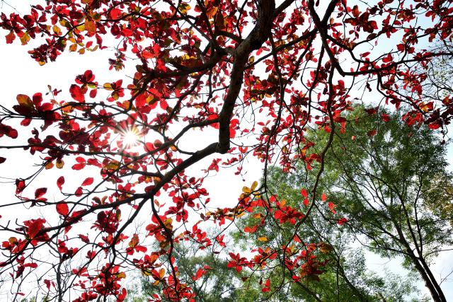 春を告げる木(2)