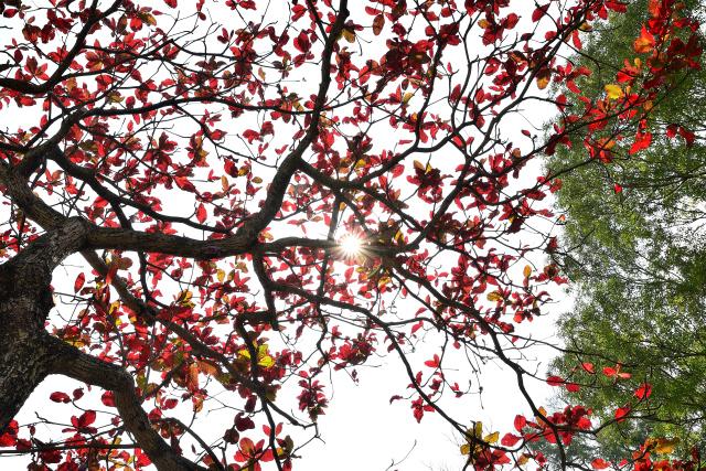 春を告げる木(1)