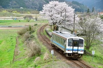 三江線の桜2017(1)