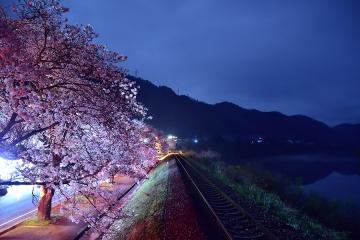 三江線の桜2017(3)