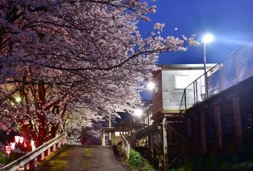 三江線の桜2017(4)
