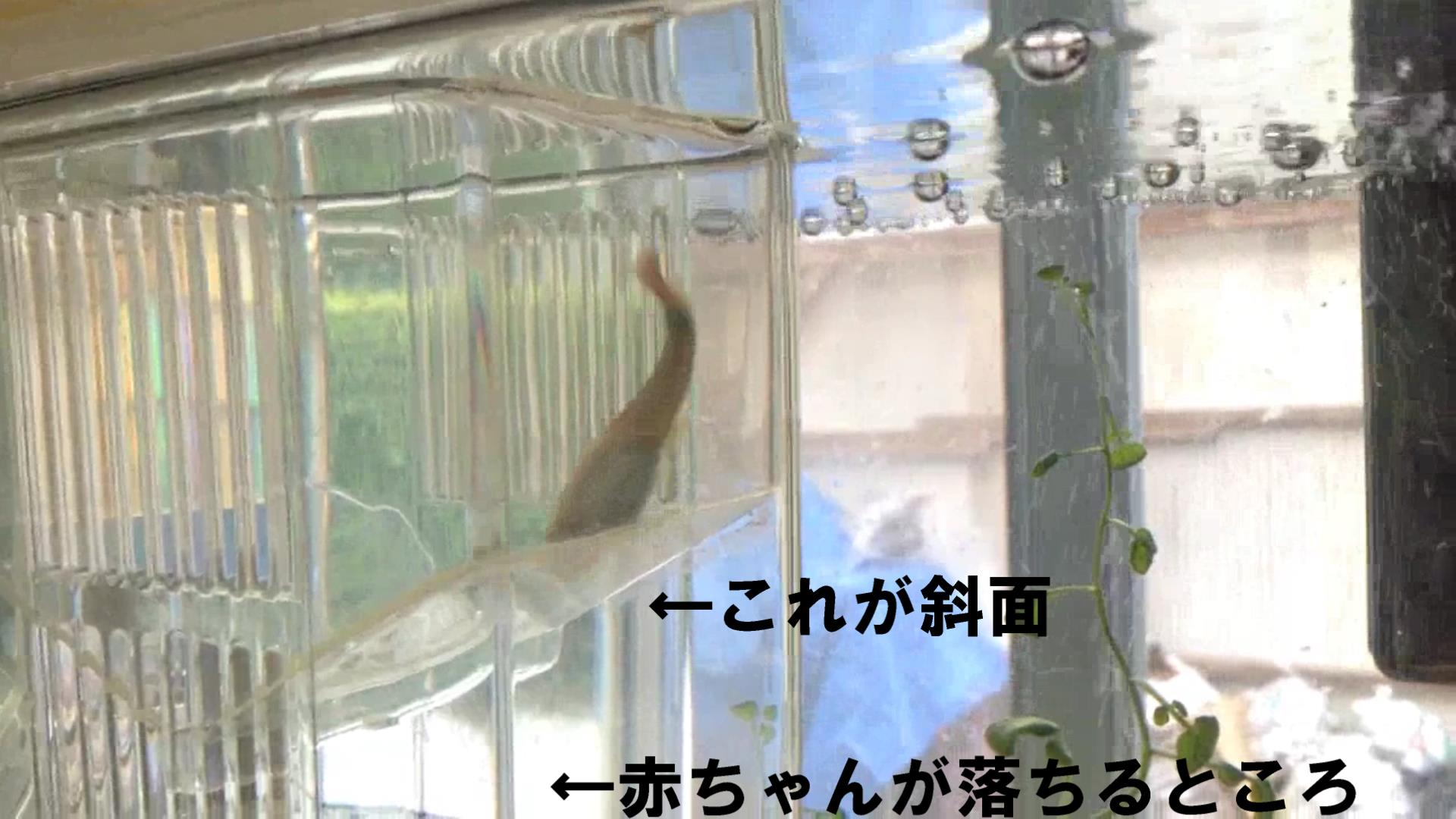 2018-3-5 サムネ