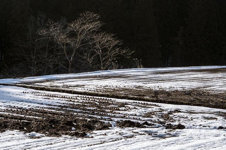 180304 雪解けの田んぼ040