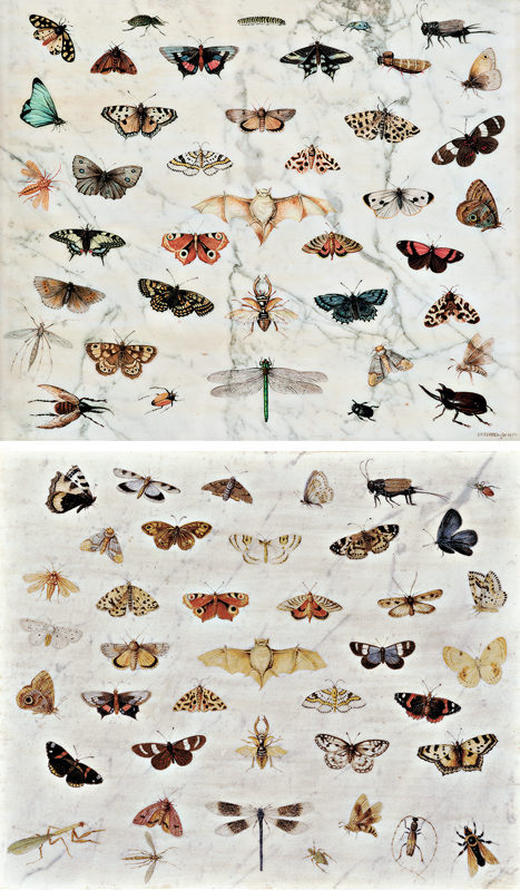 Brughel insects