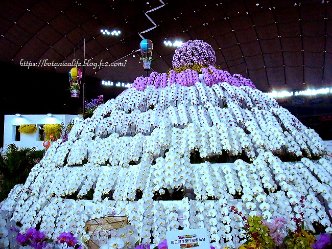 東京ドームの蘭展に行ってきました(^^)