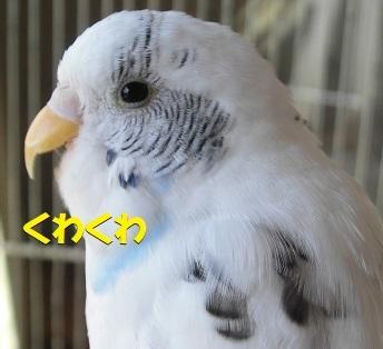 CIMG1468.jpg