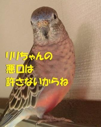CIMG1475.jpg