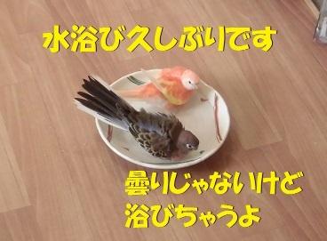 CIMG1495.jpg
