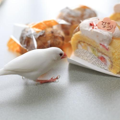 hinamaturi cake (3)