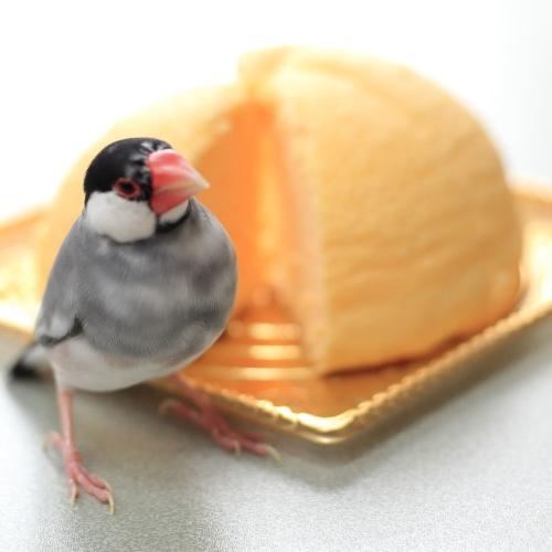 zugotto cake (4)
