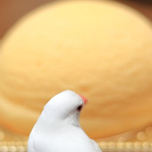zugotto cake (1)
