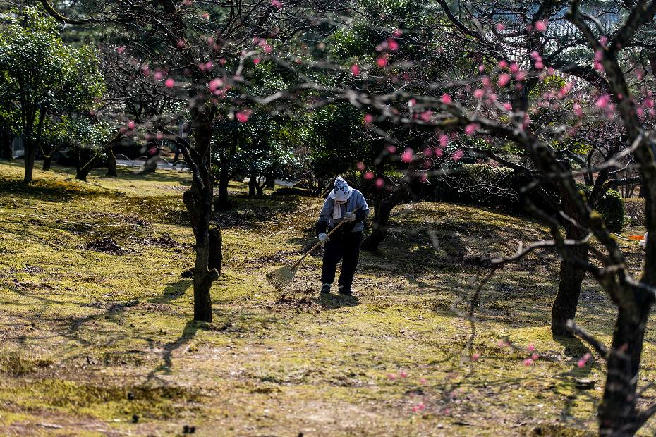 2018.03.14 兼六園の梅林 4