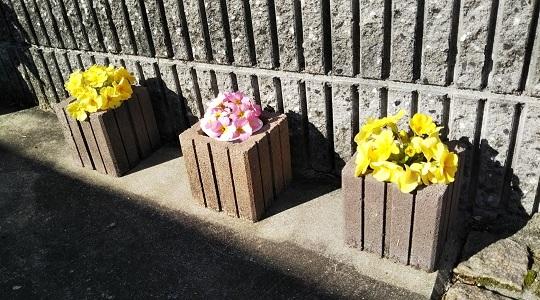 我家の花も満開