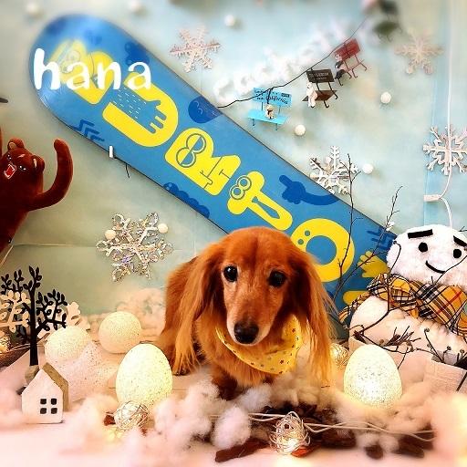 hana 塚崎
