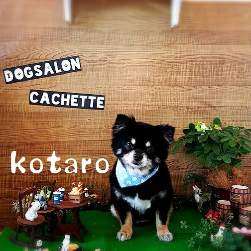 kotaro 高木