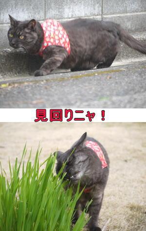 猫草たべちゃおう~