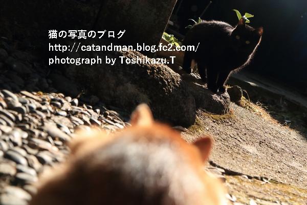 IMG_31002s.jpg