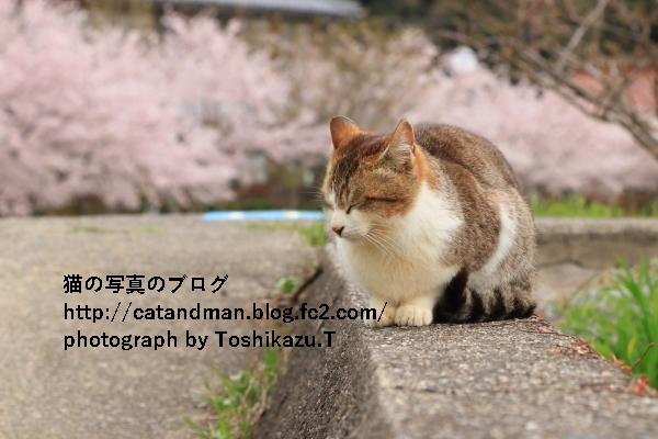 IMG_4963s.jpg