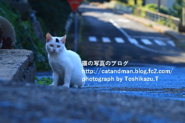 IMG_7731s.jpg