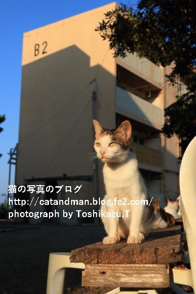 IMG_7920s.jpg