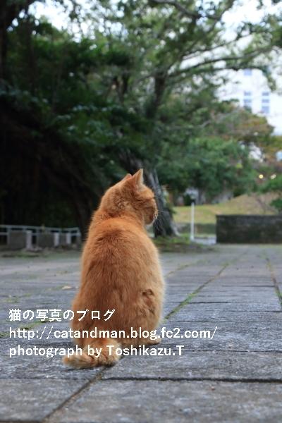 IMG_8872s.jpg