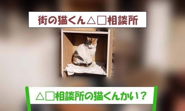 「△□相談所の猫くんかい?」