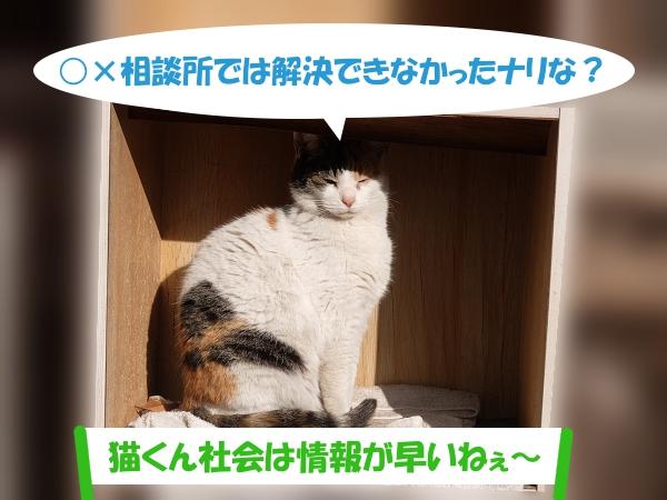 ○×相談所では解決できなかったナリな?「猫くん社会は情報が早いねぇ~」
