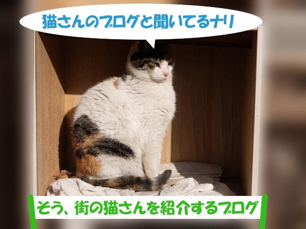 猫さんのブログと聞いてるナリ  「そう、街の猫さんを紹介するブログ」