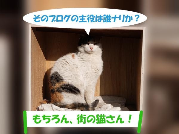 そのブログの主役は誰ナリか? 「もちろん、街の猫さん!」
