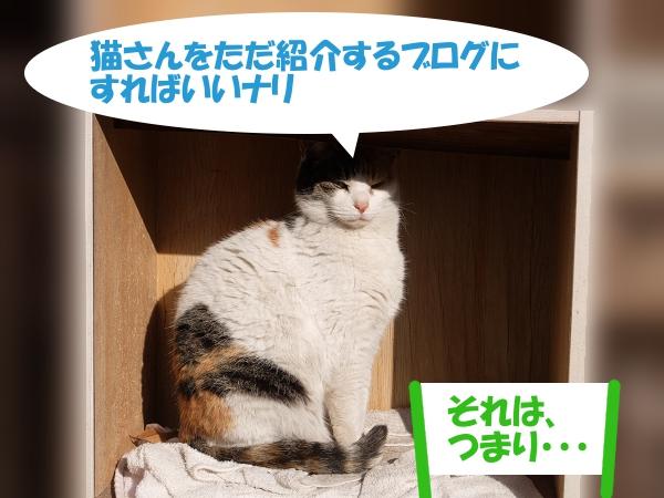 猫さんをただ紹介するブログにすればいいナリ 「それは、つまり・・・」