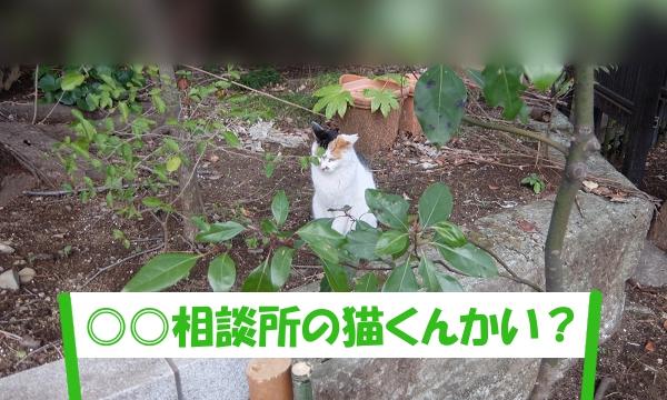 「◎◎相談所の猫くんかい?」