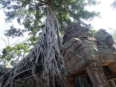 20180113_16カンボジア (10)