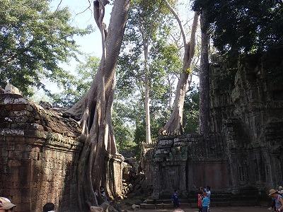 20180113_16カンボジア (12)