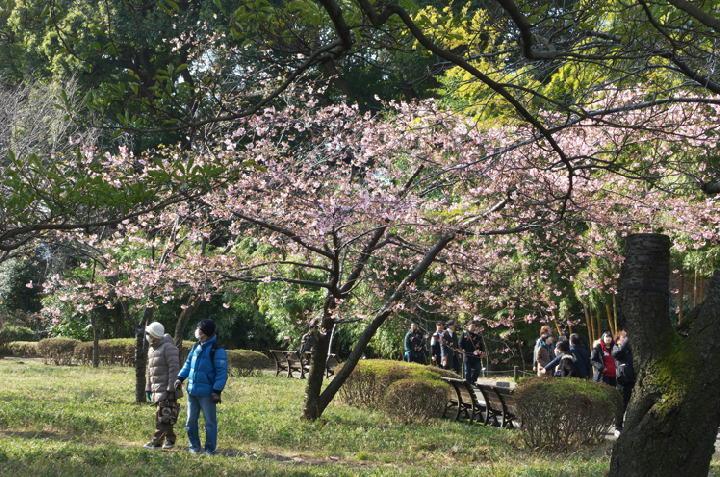 桜-172