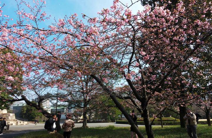 桜-178