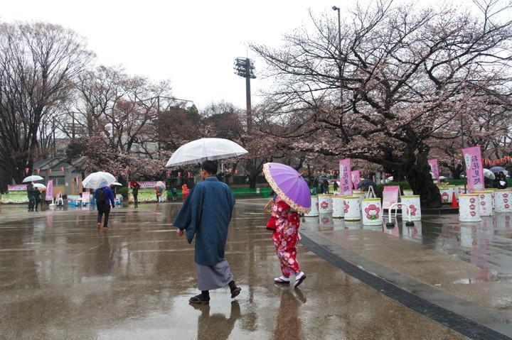 上野公園の桜-516