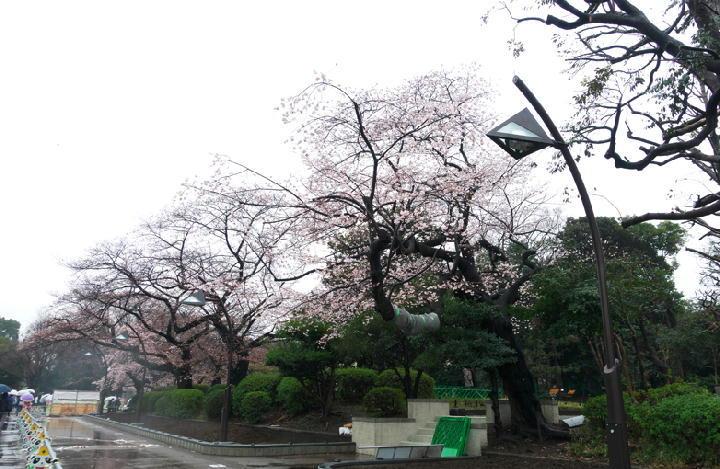 上野公園-514