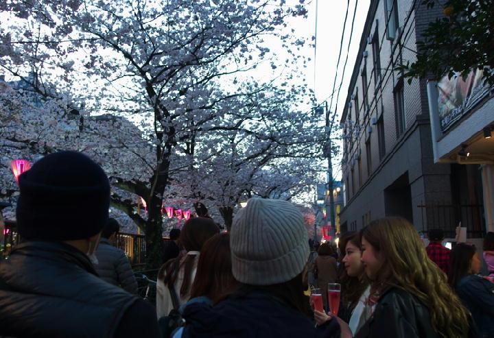 桜見物-588